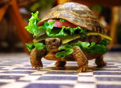 サンドイッチ、面白い、カメ、ハンバーガー.jpg