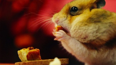 3038739-poster-p-1-hamster-thanksgiving.jpg